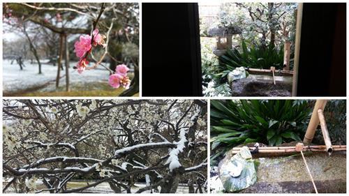 Kyoto1 (Copy).jpg