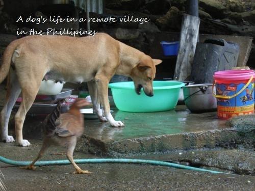 Philippines 093_500x375.jpg