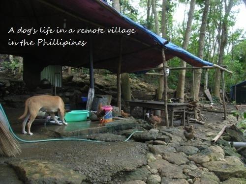 Philippines 094_500x375.jpg