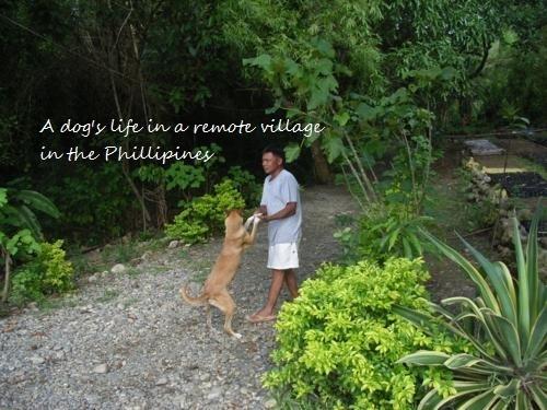 Philippines 121_500x375.jpg
