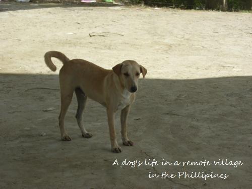 Philippines 132_500x375.jpg