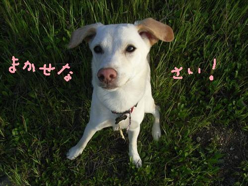 Tsuki 057rev.jpg